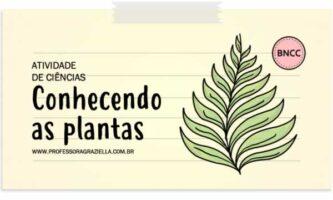 CIENCIAS - conhecendo as plantas